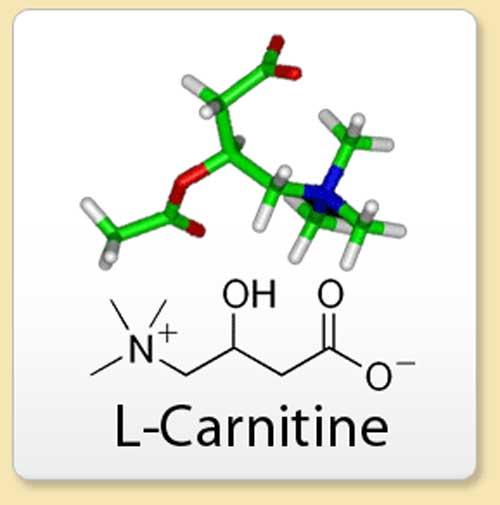 L-Carnitin Molekül