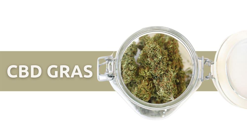 cbd gras